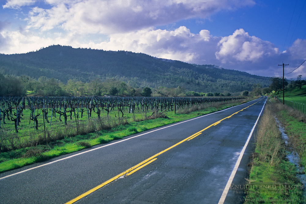 Vineyard in winter along Chiles-Pope Valley Road, Napa County, California
