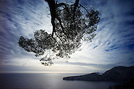 Un pin parasol penché sur la mer dans les Calanques de Marseille le 29 decembre 2009. A pine tree leaning over the sea in the Calanques Marseille December 29, 2009. (PHOTO-GENIC.CH/ OLIVIER MAIRE)