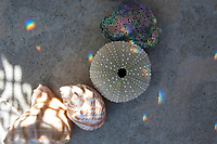Simple seashells with crystal rainbows chased by transitioning light.