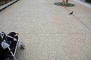 Frankrijk, Parijs, 28-3-2010Een oude hond in een buggy en een duif op straat in het centrum van de stad.Foto: Flip Franssen/Hollandse Hoogte