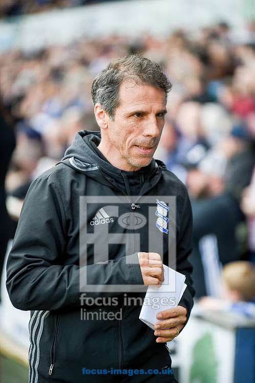 Gianfranco Zola of Birmingham City during the Sky Bet Championship match at Portman Road, Ipswich<br /> Picture by Hannah Fountain/Focus Images Ltd 07814482222<br /> 01/04/2017