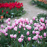 The Floral Library is a small garden patch run by the National Park Service. It's located next to the Tidal Basin and in the spring features different varieties of tulips and daffodils.