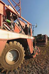 Engins de recolte des haricots