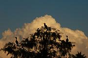 Bird Sanctuary Orlando FLa prehistoric look