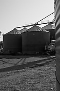 FMC Authority SRA Omaha photographed by Scott Drickey at Kip Smith Farm Co. in Dudley, Missouri.