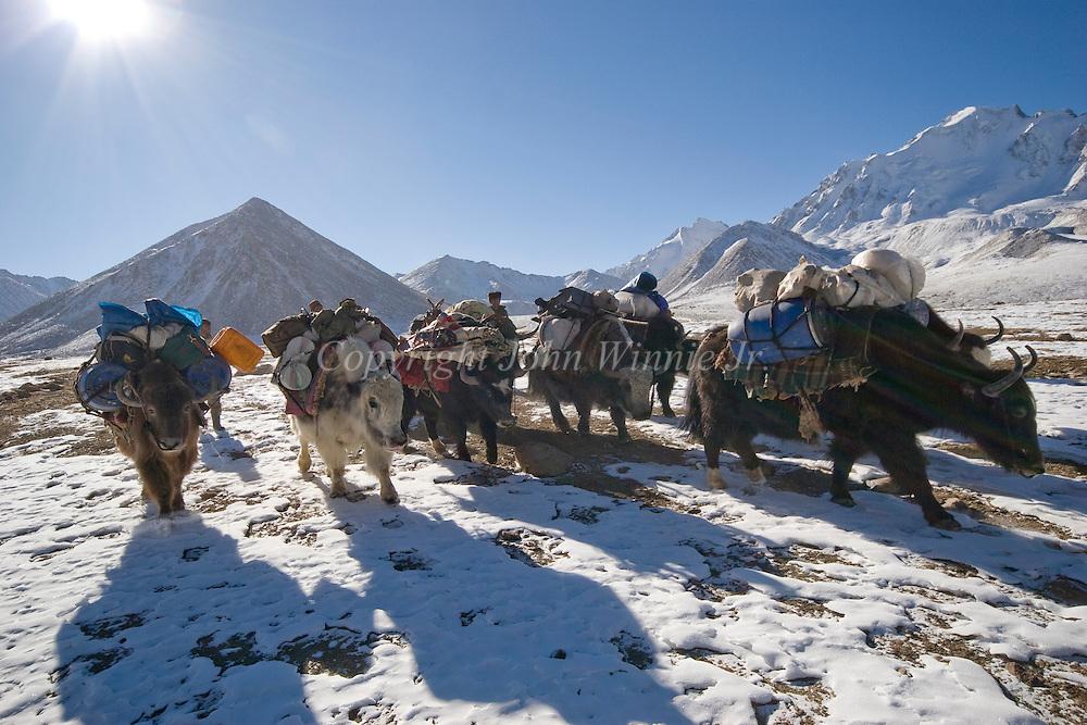 Herders with a yak team. Big Pamir, Afghanistan.