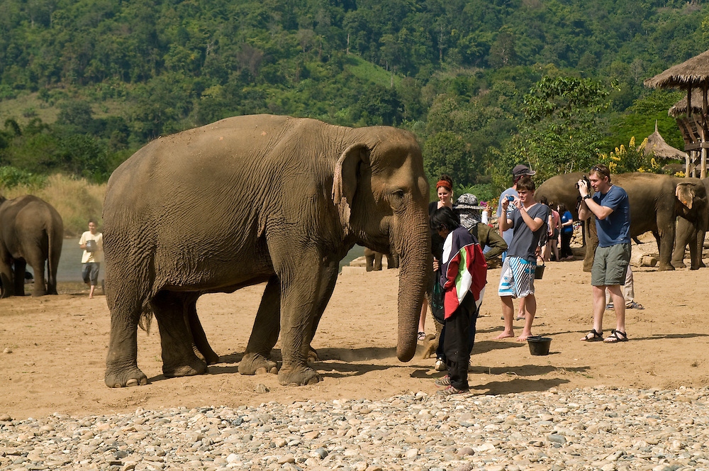 "Tourists and volunteers interact with the elephants at the Elephant Nature Park near Chiang Mai, Thailand.  Sangduen ""Lek"" Chailert founded the park as a sanctuary and rescue centre for elephants.  The park currently has 32 elephants sponsored and supported by volunteers from all over the world."