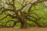 Angel Oak Johns Island