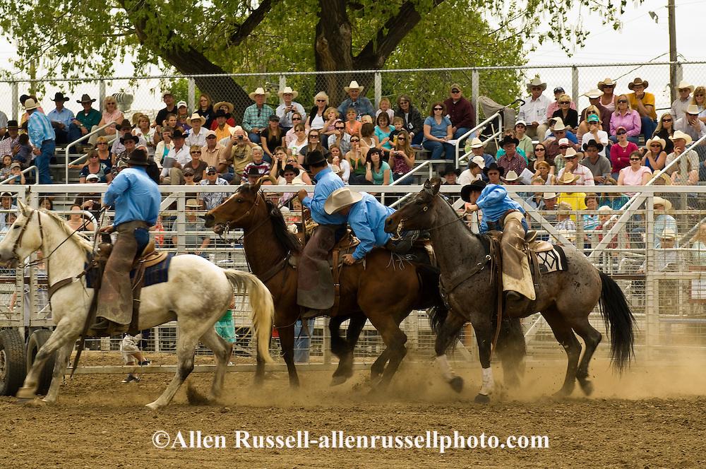 Pickup men Jay Shaw, Kyle Shaw and Lynn Ashley pick up saddle bronc, Miles City Bucking Horse Sale, Montana