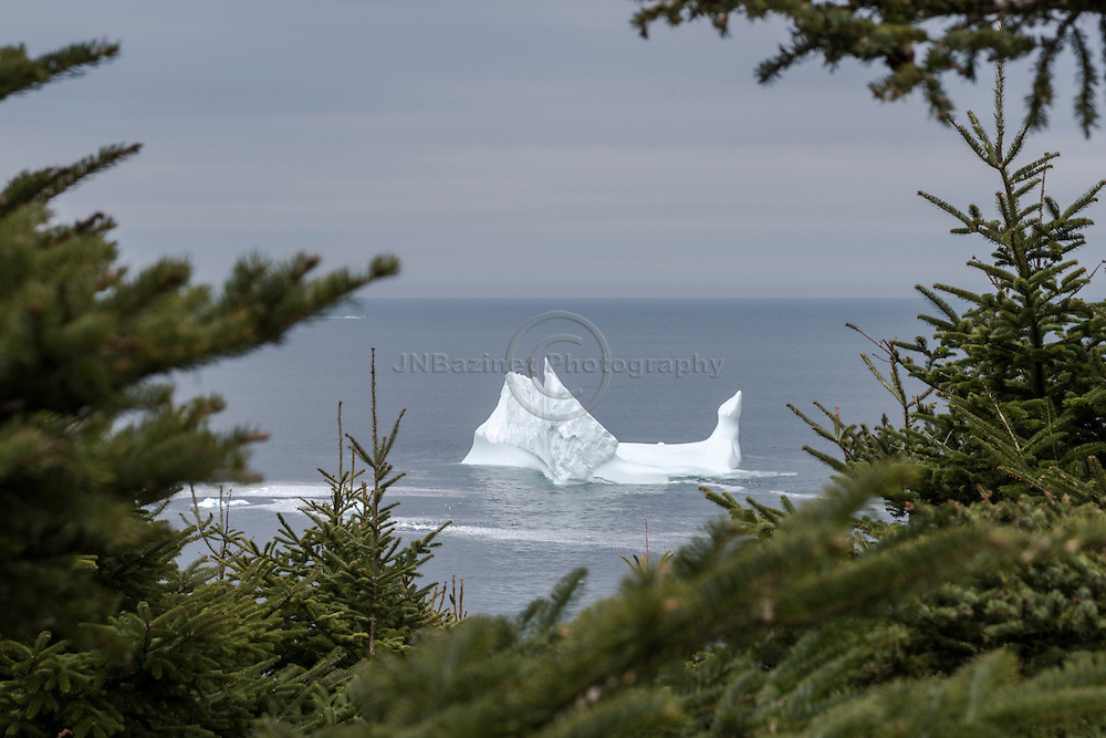 Newly arrived iceberg in Torbay, Newfoundland Labrador Canada