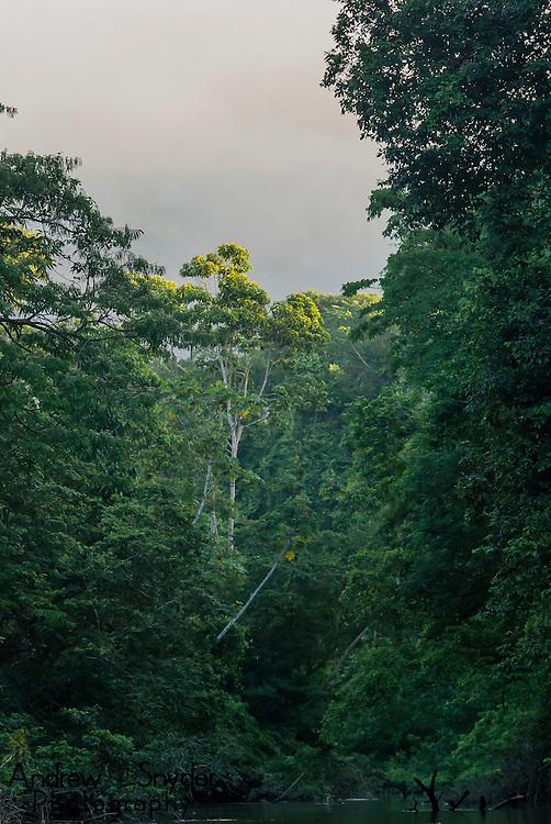 Early morning sunlight illuminates the canopy of a tree along the Burro-burro River in Surama, Guyana.