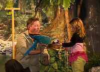 """Georgia Symonds is in awe as """"Kelly"""" the Macaw eats out of her hand on stage with Mike Kohlrieser of Wildlife Adventures during last evenings show at Woodland Heights Elementary School.  (Karen Bobotas/for the Laconia Daily Sun)"""