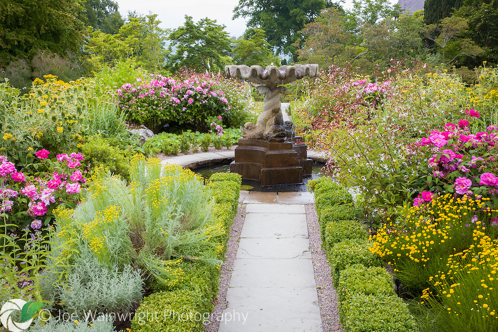 Santolinas and roses bring colour to The Round Garden at Bodnant Gardens, near Conwy, North Wales. Photographed in July.