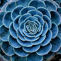 Cacti-Succulents