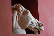 Greek Marble statue of the head and front legs of a horse