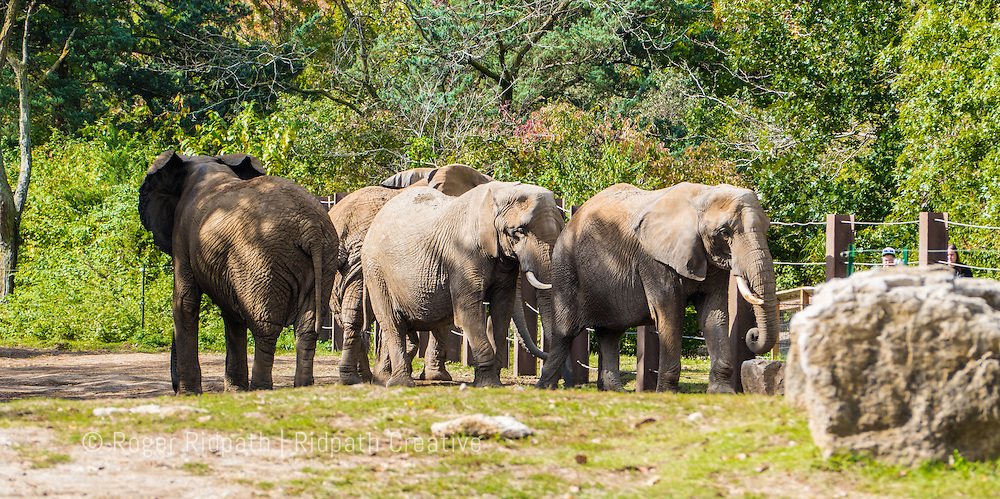 elephants at Kansas City Zoo