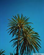 Palm trees Ibiza