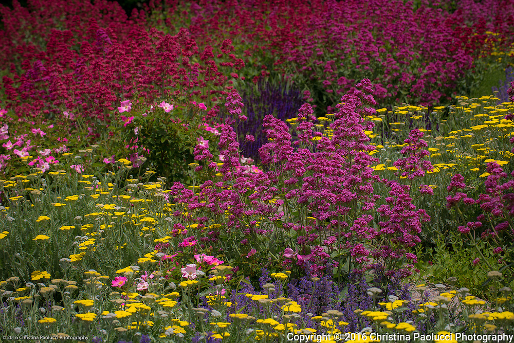 Wildflowers in Santa Fe, New Mexico (Christina Paolucci, photographer).