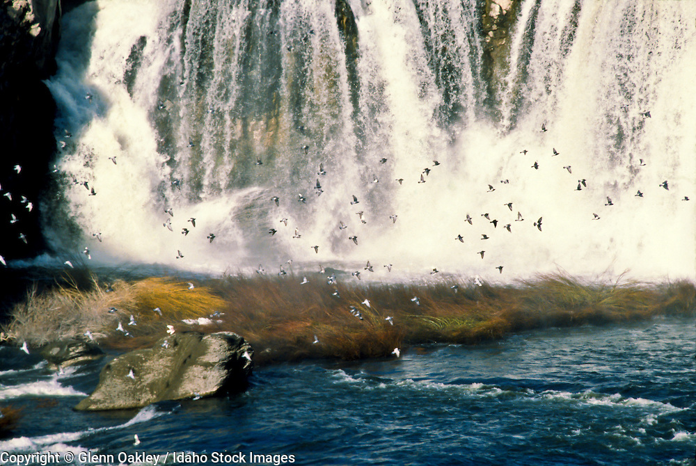 A flock of birds flying in front of a waterfall