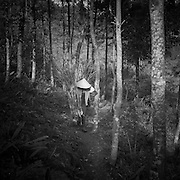 A Vietnamese woman carries lumber out of the forest,  Ha Giang Province, Vietnam, Southeast Asia