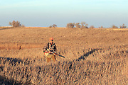 Pheasants Hunting in Eastern South Dakota