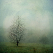 Lone tree on a meadow on a misty novermber morning
