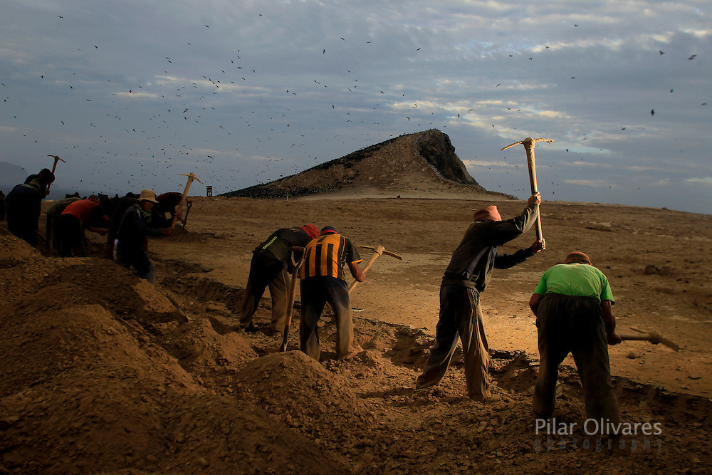 Workers scrape stones to collect bird dung on the Ballestas island, south of Lima, October 9, 2011. Ballestas, as with other 21 islands along the Peruvian coast, are home of nearly 4 million migratory birds as guanays, boobies and pelicans which excrement make up the world's finest natural fertilizer. The bird dung, also known as guano, reached its greatest economic importance in the 19th century as a coveted resource, being exported to United States, England and France. Now, Peru hopes to benefit mostly small farmers with an annual production of 20 thousand tons, destined to boost organic agriculture, according to Agrorural, the Rural Agrarian Productive Development Program.
