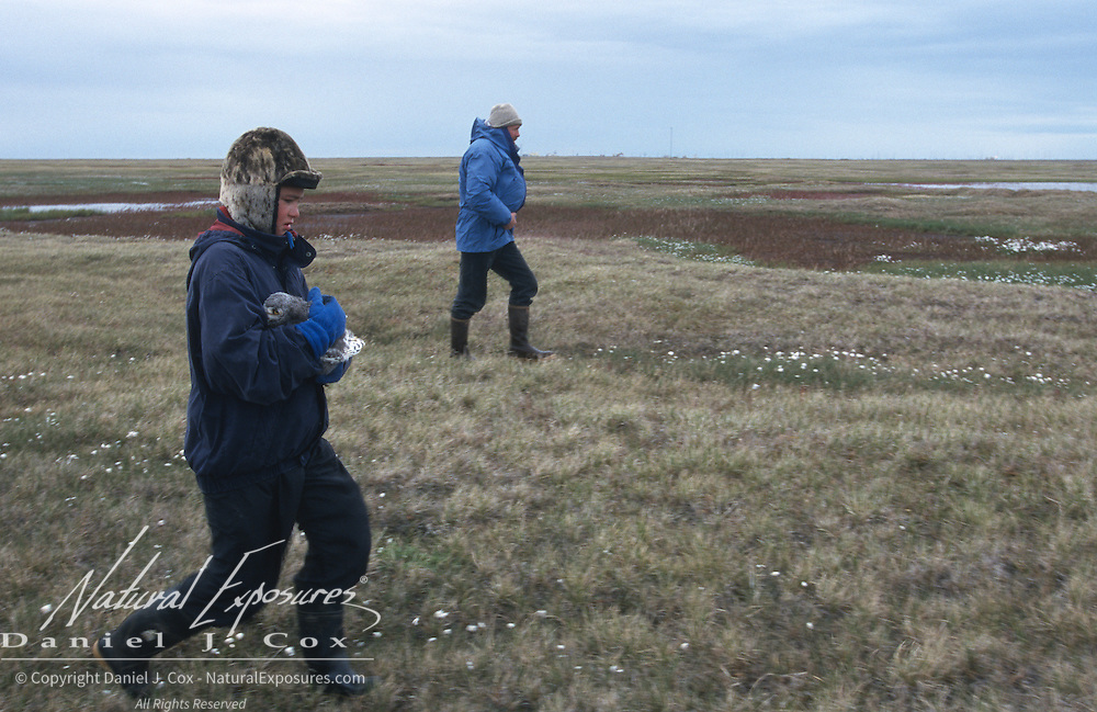 Denver Holt and Nuk going to the Snowy Owl nest site to release chicks. Barrow, Alaska