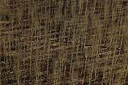 Nederland, Betuwe, Gemeente Geldermalsen, 07-03-2010; Beesd, Lage Veld. Jonge aanplant van bomen..luchtfoto (toeslag), aerial photo (additional fee required).foto/photo Siebe Swart