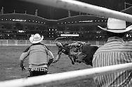 Rodeo 13, Sydney