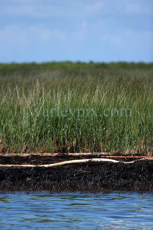 21 August 2010. Bay Jimmy, south Louisiana. <br /> Despite government and BP efforts to persuade the public otherwise, oil continues to wash up in the marshes of Bay Jimmy, flowing under absorbent oil boom as the worst environmental disaster in US history continues to unfold in south Louisiana.  Despite concerted clean up efforts, filthy oil laden absorbent oil boom lies uselessly in the marshes the boom is suppose to protect.<br /> Photo credit; Charlie Varley.