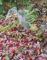 Fall foliage, Sharon, New Hampshire.