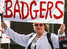 2017-03-27 Protest outside Parliament against Badger culling