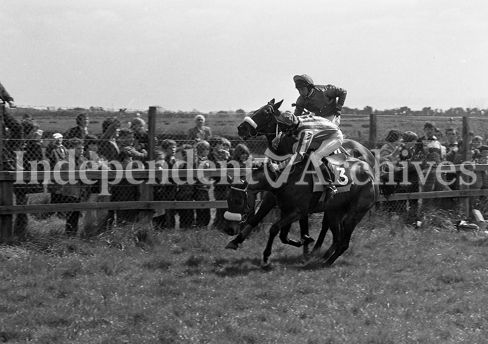 The final flight to win the Percy Maynard Memorial Hurdle at Fairyhouse, Meath, 20/04/1981 (Part of the Independent Newspapers Ireland/NLI Collection).