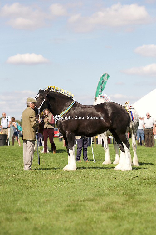 David Cosgrove  and Hainton Tiara<br />