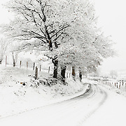 Road covered with snow in winter scenery with trees.