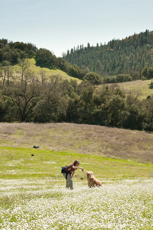 Woman taking a picture of her dog (golden retriever) in a field of wildflowers, Magnolia Ranch BLM area, El Dorado County, California