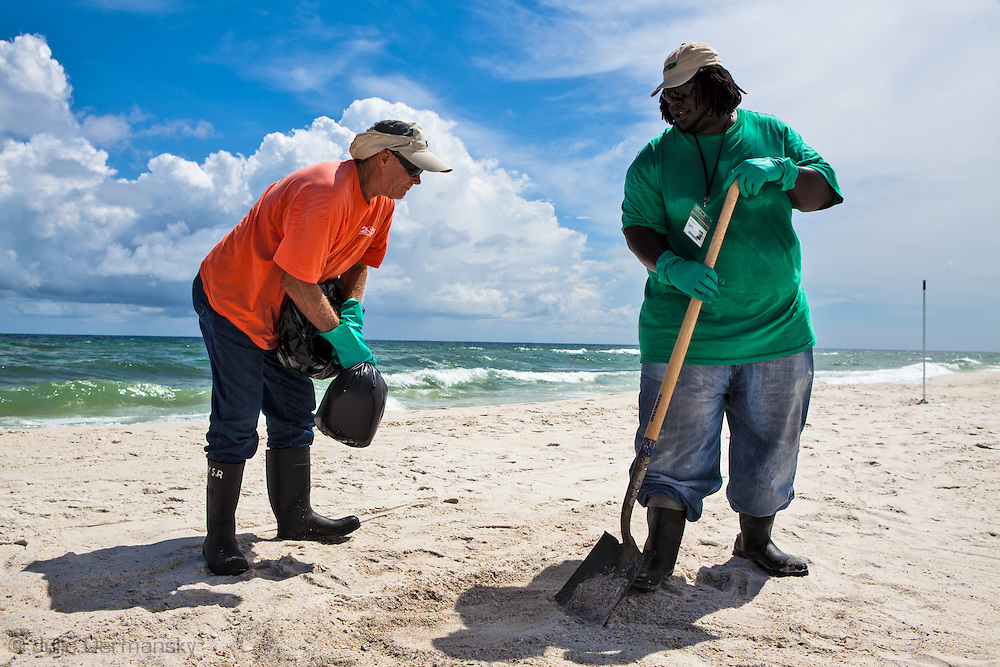 7/16/2010 BP oil spill clean up workers rake up small tar balls in Gulf Shores Alabama.