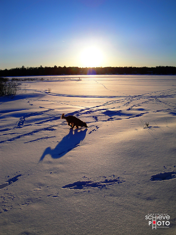 A dog plays in the snow at sunset in northern Wisconsin.