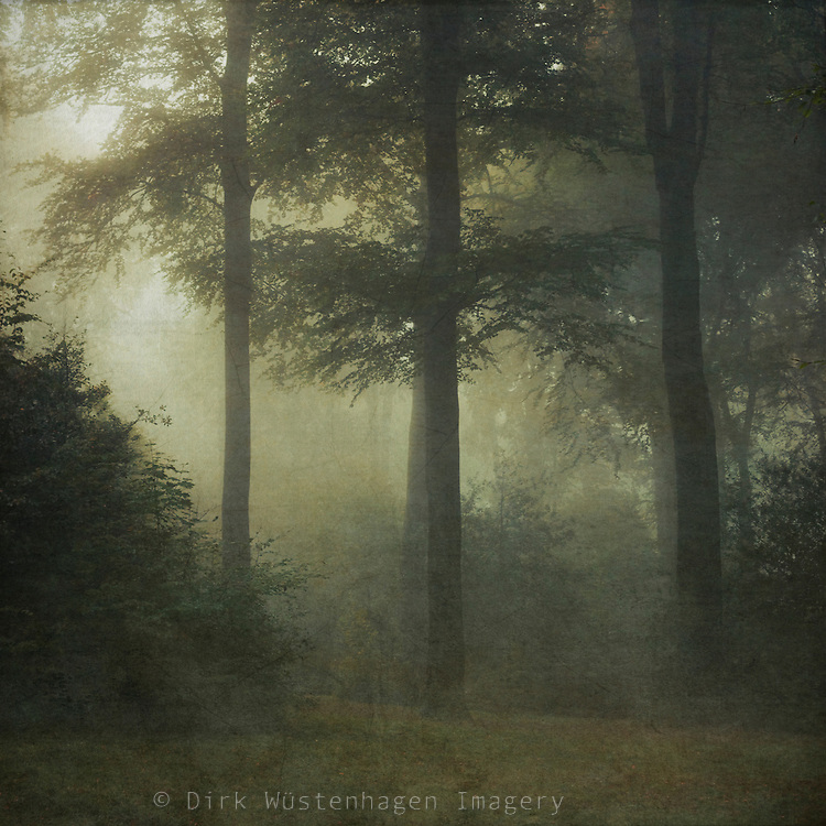 Landscape on a misty October morning - textured photograph