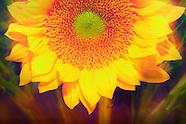 Flower photos and art