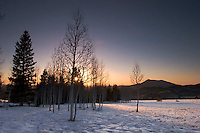 Aspen Trees at Sunset, Coconino National Forest, Arizona
