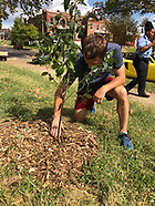 St. Louis Plant A Tree Day