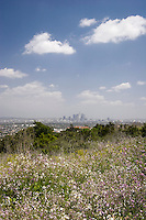 Spring Wildflowers and Los Angeles Skyline in Distance, Kenneth Hahn State Recreation Area, California