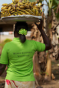 Mary Adoku is the daughter of a cocoa farmer. Today she earns a living as a banana trader but when she is not at the markets she works as a volunteer Women Extension Volunteer for the Kraft Cocoa Partnership.