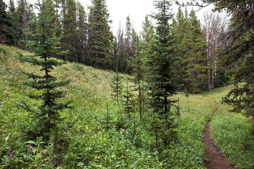 On the Sportsmans Lake Trail, towards Electric Peak. Yellowstone National Park, Wyoming.