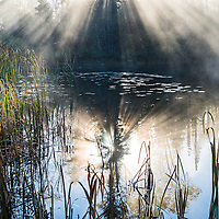 http://Duncan.co/beams-of-light-through-morning-fog