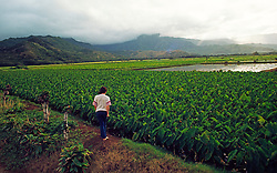 Pineapple Fields Agriculture