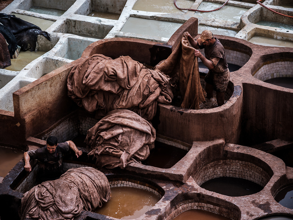 FEZ, MOROCCO - CIRCA APRIL 2017:  Men working in the Fez tannery dyeing leather.