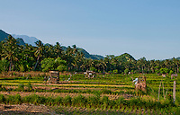 Rice fields looking toward Agung from Candidasa, Bali, Indonesia
